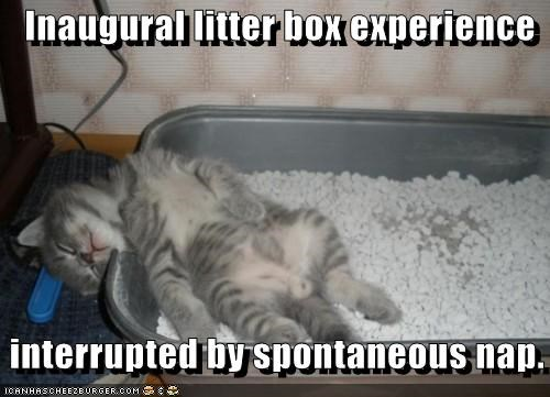 Inaugural litter box experience   interrupted by spontaneous nap.