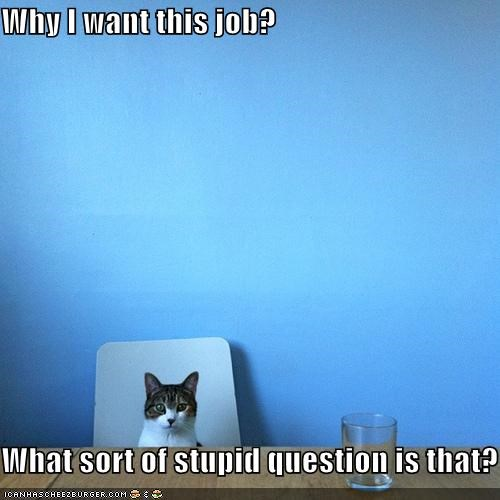 best of the week cat Hall of Fame I Can Has Cheezburger interview questions job interview Stupid Question - 5397499904