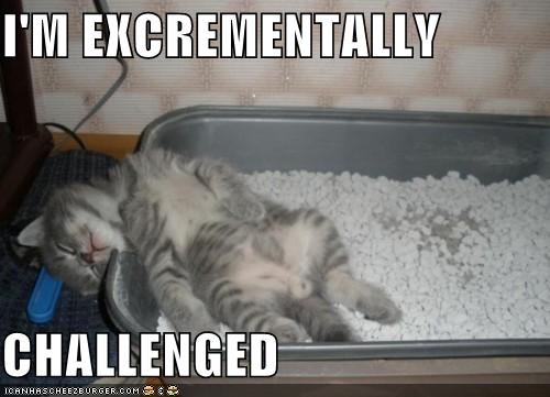 asleep,bathroom,caption,captioned,Cats,challenged,excrement,litter,litter box,litter boxes,poop,sleeping,wordplay