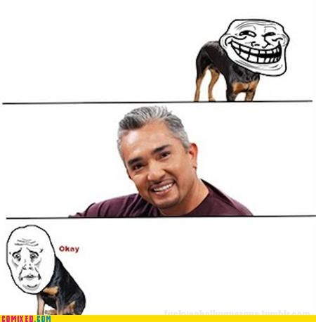 dogs Okay problem the dog whisperer the internets u mad - 5397662976