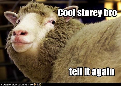 animals,cool story,cool story bro,sheep,story
