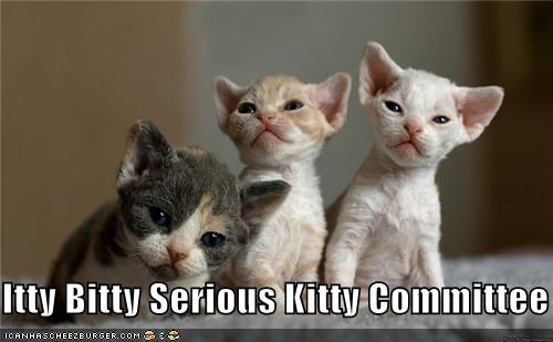 Itty Bitty Serious Kitty Committee