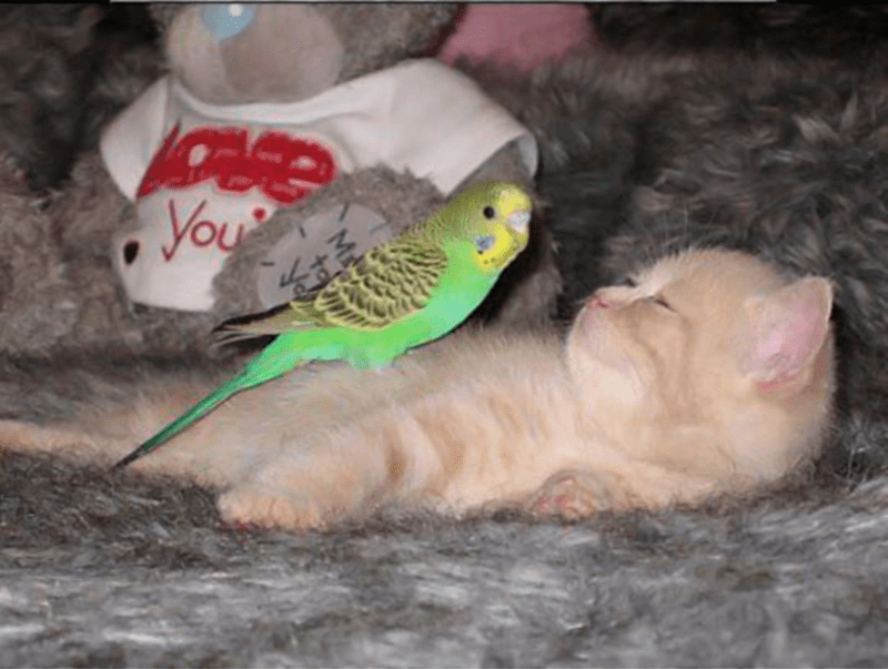 lolcats birds kitten cute relationships Cats funny - 5400325