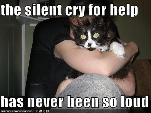 help,hoomans,humans,lolcats,scared