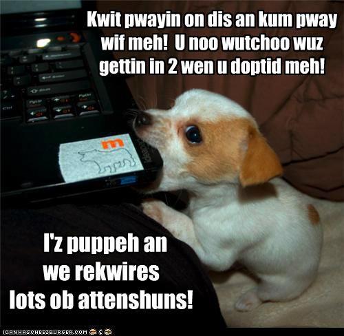 Kwit pwayin on dis an kum pway wif meh! U noo wutchoo wuz gettin in 2 wen u doptid meh! I'z puppeh an we rekwires lots ob attenshuns!