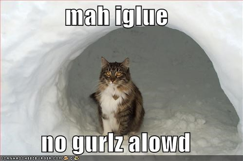 cat I Can Has Cheezburger igloo no girls allowed - 5400986624
