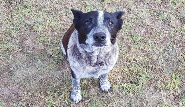 dogs twitter australia cute good boy tweets queensland - 5401093
