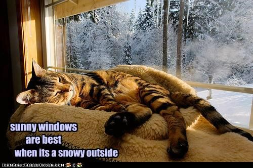 sunny windows are best when its a snowy outside