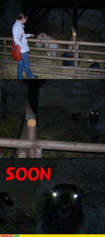 animals sheep SOON Tenso - 5401849088