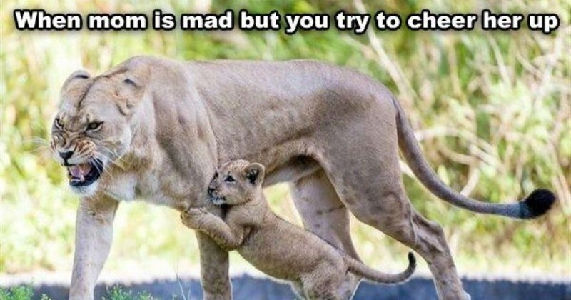 animal parenting memes GIFS and pics