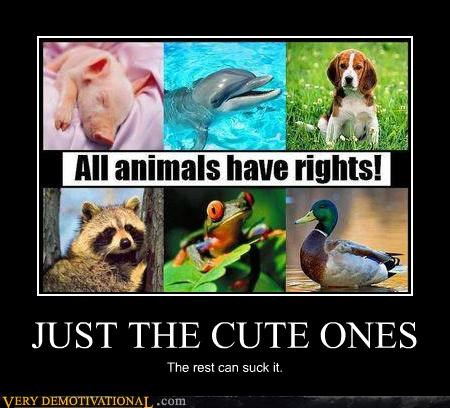 animals,cute,hilarious,ugly