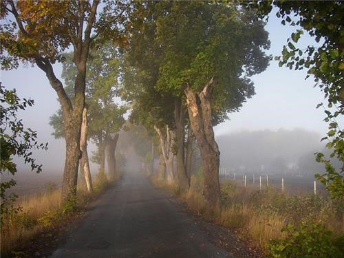 europe,fog,getaways,mist,road,rural,Sweden,trees