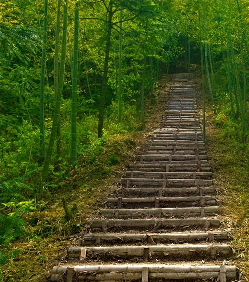 asia bamboo China Forest forest steps getaways green peaceful stairs steps trees woods - 5402614528