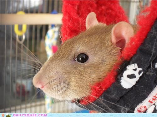 baby,cuddling,expression,hammock,idiom,improvement,rat,reader squees,relaxing,snuggling