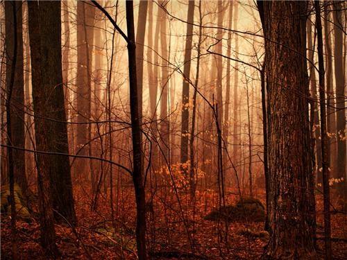 brown Canada Forest getaways north america ontario tan trees - 5402643712