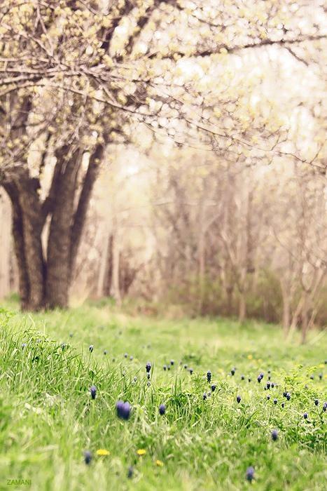 field flowers getaways grass iran middle east peacful southwest asia spring treeline trees - 5402654208