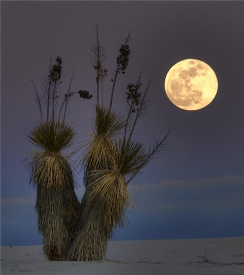 flora full moon getaways new mexico night night photography serene united states white sands - 5402679296