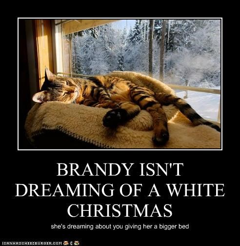 BRANDY ISN'T DREAMING OF A WHITE CHRISTMAS she's dreaming about you giving her a bigger bed
