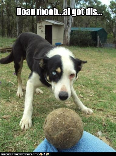ball border collie dont-move let me handle this mixed breed play-playing - 5402901504