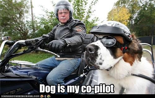 crusin dog is my co-pilot drive driving goggles helmet motorcycle saint bernard - 5402910720