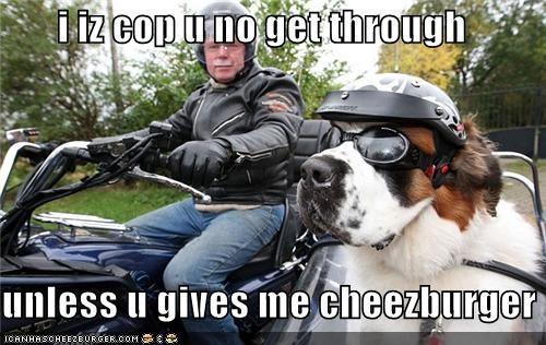Cheezburger Image 5403019776