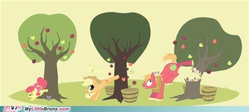 applebucking applejack Big Macintosh harvest ponies Sweetie Belle - 5403120896