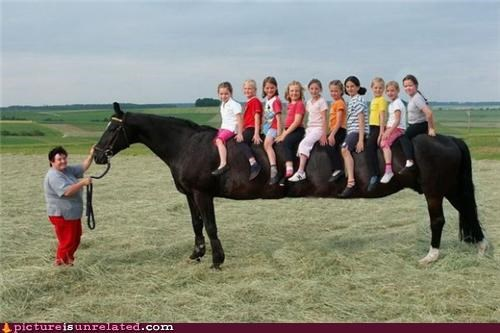 horse,longcat,wtf