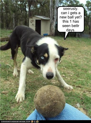 seerusly. can i gets a new ball yet? this 1 has seen bettr days.