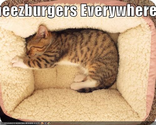 Cheezburger Image 5404076800