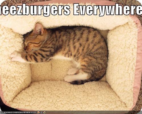 Cheezburger Image 5404076800