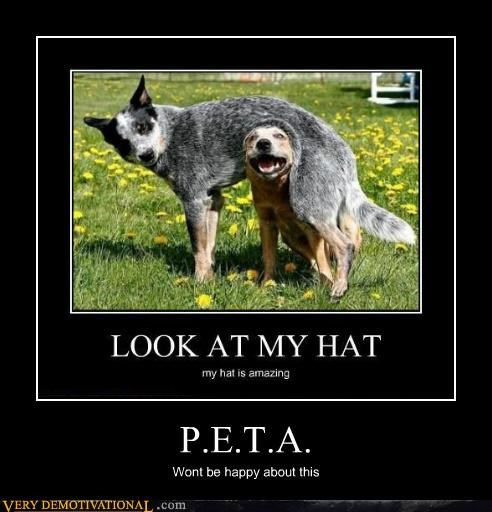 dogs hat hilarious peta - 5404616448