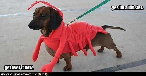 yes im a lobster. get over it now.
