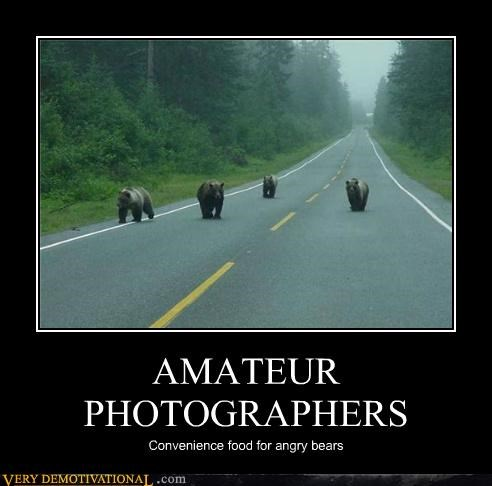 amateur animals bears hilarious photographers - 5405238016