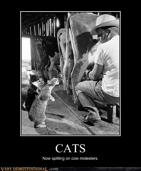 animals,Cats,cow,hilarious,molester,spit,wtf
