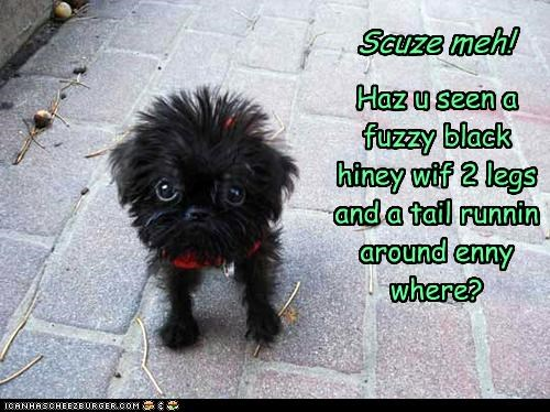 Scuze meh! Haz u seen a fuzzy black hiney wif 2 legs and a tail runnin around enny where?