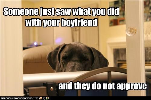 boyfriend,chocolate lab,disapproval,disapproving,gross,i do not approve,i saw that,labrador retriever,no