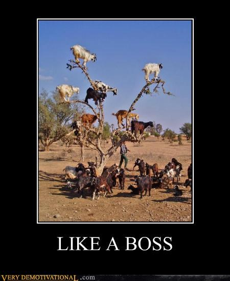 animals climbing goats hilarious photoshop - 5406301440