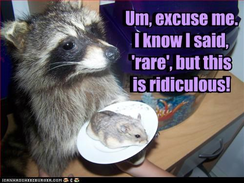 caption,captioned,dinner,do not want,excuse me,hamster,raccoon,rare,ridiculous