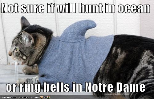 bells caption captioned cat costume dressed up fry meme hunchback hunt not sure notre dame ocean ring shark sweater - 5406900224