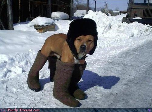 dog uggs poor dog too much clothing for an animal