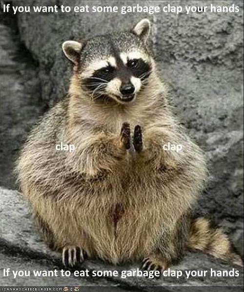 animal cute eat eating food garbage Hall of Fame happy hungry racoon - 5407096576