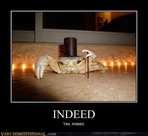 animals,crab,gentleman,hilarious,indeed,shellfish
