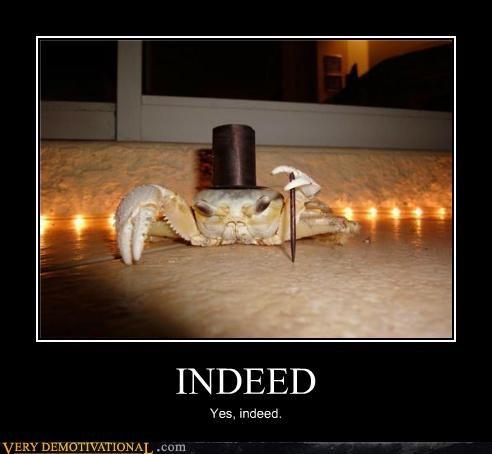 animals crab gentleman hilarious indeed shellfish - 5407150848