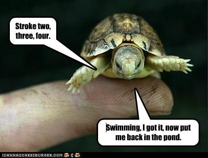animals,swim,swimming,swimming lessons,tortoise,turtle