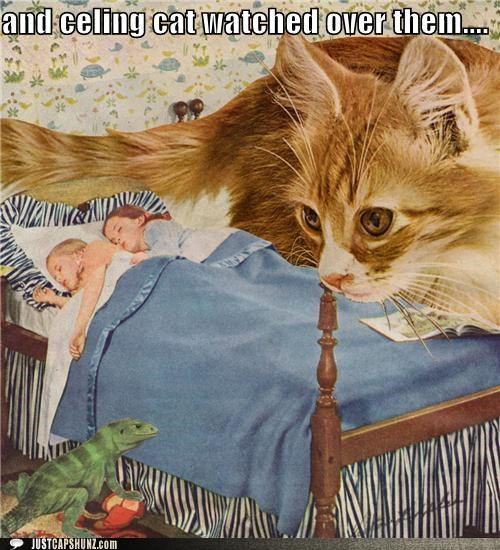 asleep,bed,bed time,bizarre,caption contest,cat,lizard,mixed media,sleeping,stalker,stalkers,wtf