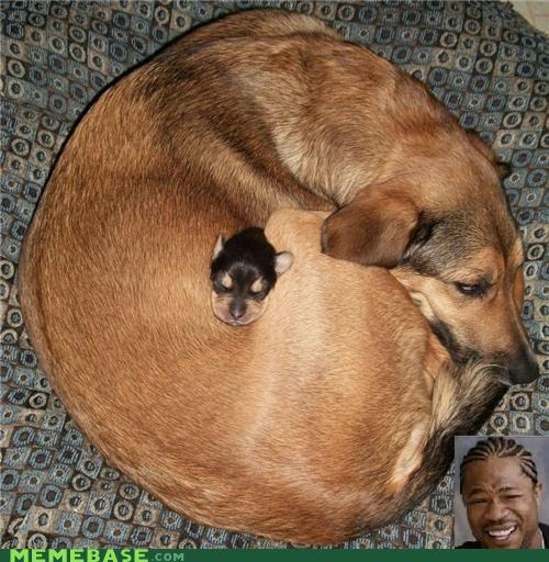 animemes circle dawgs dogs Inception lol yo dawg - 5407193856