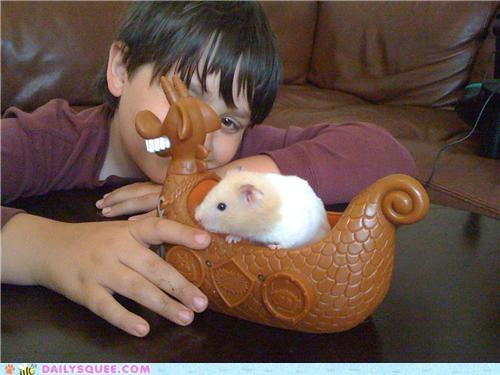 hamster memorial memory r-i-p reader squees - 5407212800