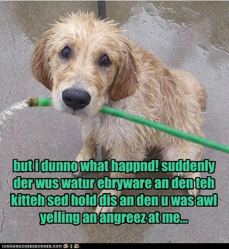 angry,cat,hose,oops,water,what happened,whatbreed,whats-wrong