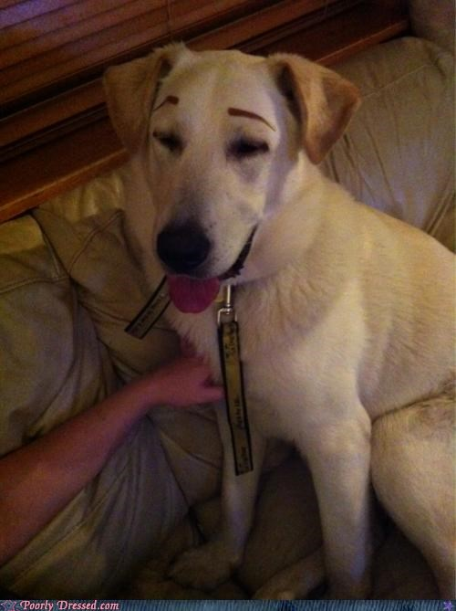 eyebrows poor dog why