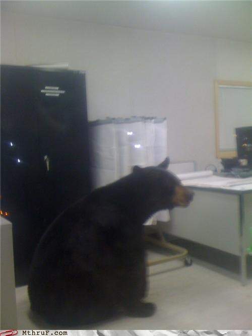 animals,bear,Office,wait what,work